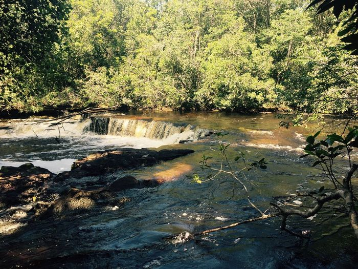 Amazonas Presidente Figueiredo Tree Water Forest Nature No People River Beauty In Nature Waterfall Day Sunlight