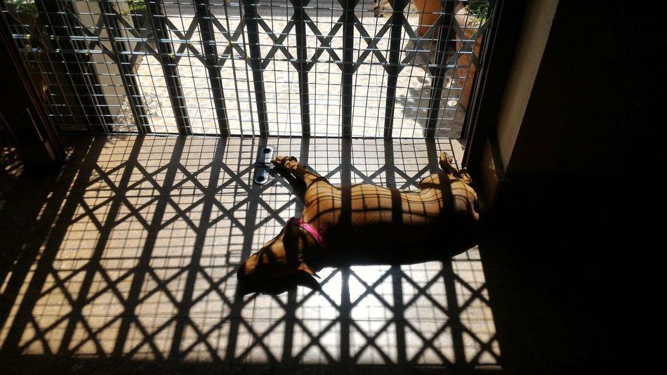 Dog❤ Dog Life Minature Pincher Doglover Minipinscher Pet Dogslife Dogs Mini Pincher Dog Lover Doglovers Dog Love Pets Dog