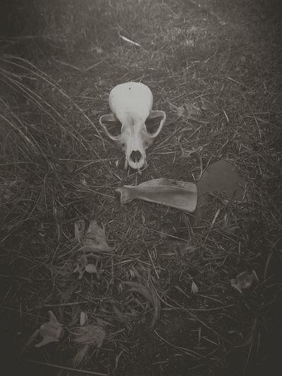 Bones. Dark Bwphotography EyeEm Best Shots