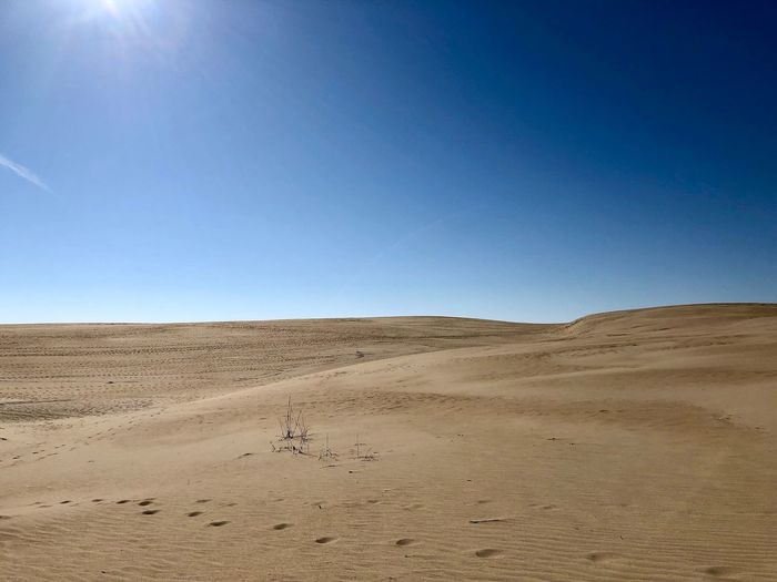 Backgrounds Outdoor Photography Sand Dune Sky Clear Sky Environment Scenics - Nature Land Landscape Desert Tranquil Scene Copy Space Beauty In Nature Animal Non-urban Scene Animal Themes Sand Tranquility Nature Blue Arid Climate Day No People
