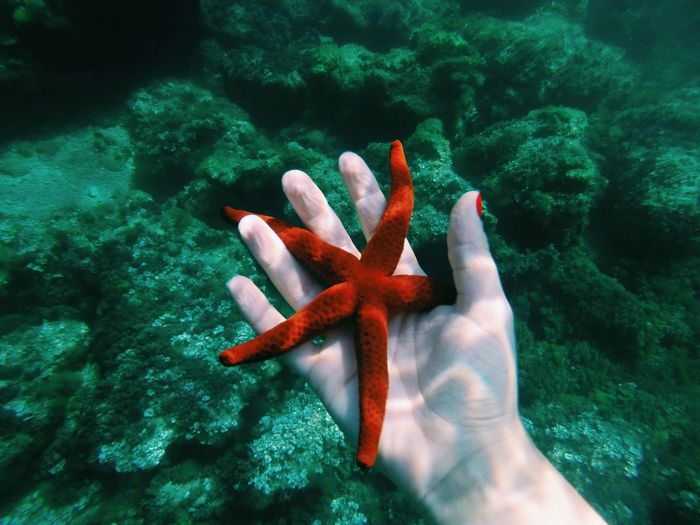 Cropped image of hand holding starfish in sea