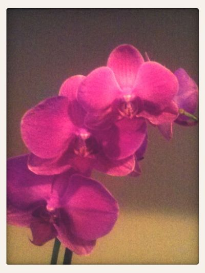 My daughter gave me this precious orchids for my B-day