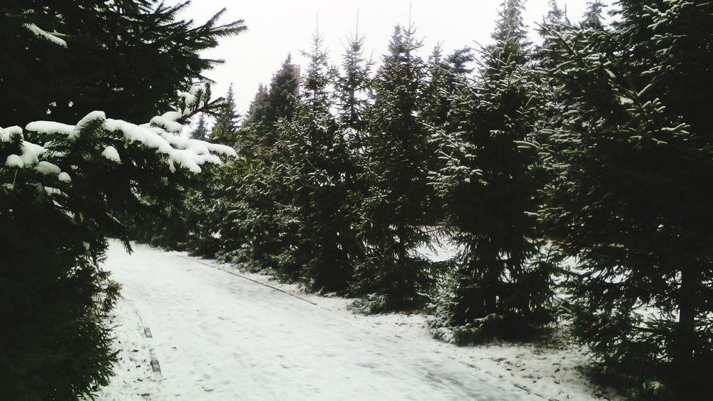 Walking Around Nature Snow снег парк Park Wintertime Winter снег на ветке