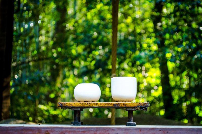 Tea TeaCup Teaceremony The Still Life Photographer - 2018 EyeEm Awards Food And Drink Forest Green Color Japanesetea Nature Teagarden