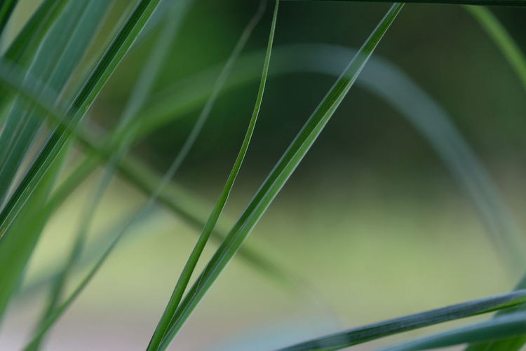 Close-up of fresh green crops in field