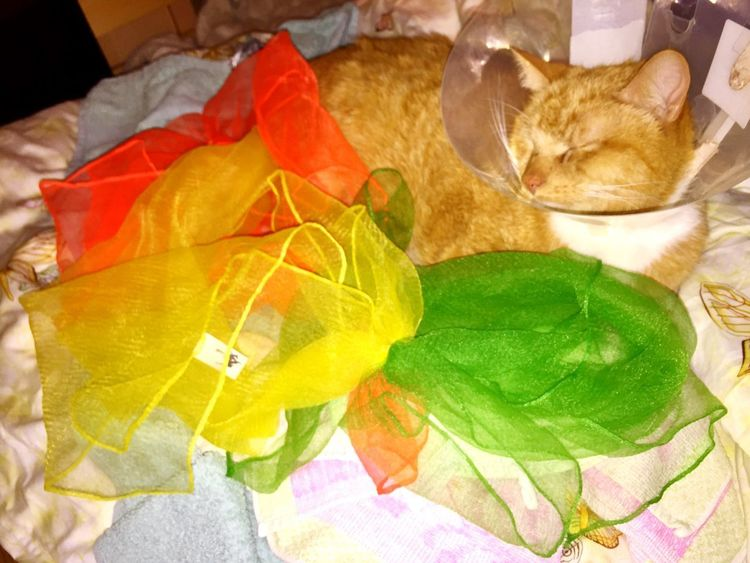Green Orange Yellow Healthcare And Medicine Cat Portraits Silkscarves Cat Illnesses Catch The Moment Cat Power Catlifestyle Katzenleben Catlife Colour Theraphy Colour Of Life Orange Yellow And Green Ginger Cat Pet Portraits Catslife Cat Portrait Cat Photography Cat Model Cat♡