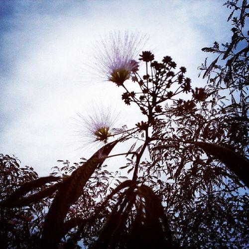Flowers Story 一个故事 Wait 我等开了花 等落了叶 等来了风 等红了夕阳 等黑了夜 却等不到你