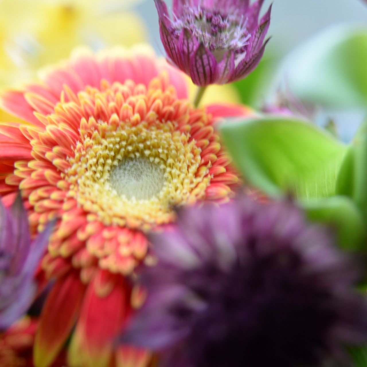 flower, petal, beauty in nature, flower head, fragility, freshness, nature, growth, no people, close-up, plant, outdoors, day, blooming
