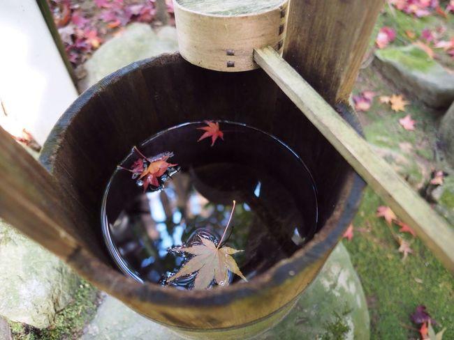 Kyoto Japan Kouetsuji Autumn Autumn Colors Autumn Leaves Leaves Beauty In Nature Water Olympus PEN-F 京都 日本 光悦寺 寺 紅葉 秋 もみじ 水