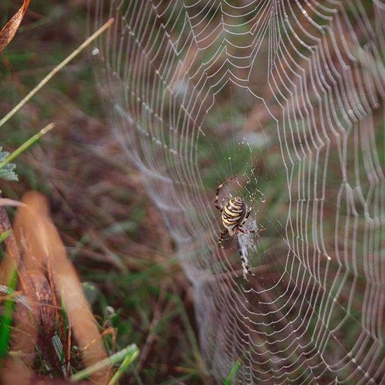 И только то, что создано природой - совершенно Природа паук роса паутина нарассвете