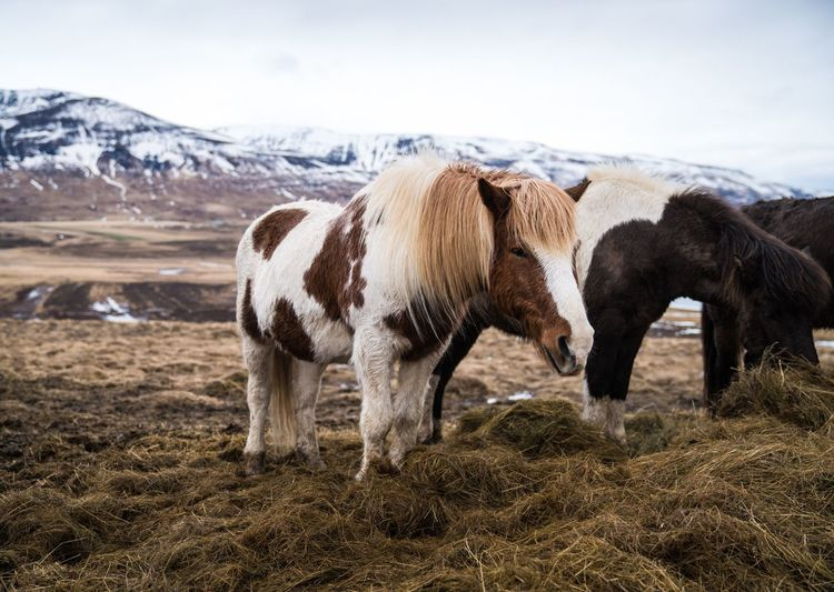 Horses on field against mountains