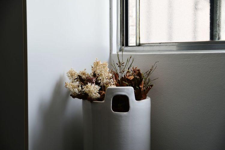 Indoors  Window Light Vase Flower Pot
