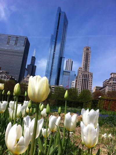 Enjoying Life Building millenium park chicago