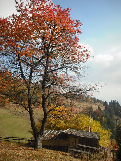 Autumn Beskidsadecki Memories Nature Niemcowa Polishmountains Tree Red Color Leaf 🍂 Village View Mountain Sky And Clouds My Favorite Place Good Times Colorful Nature