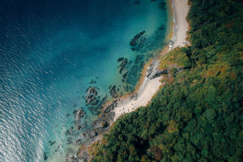 High angle view of trees at beach