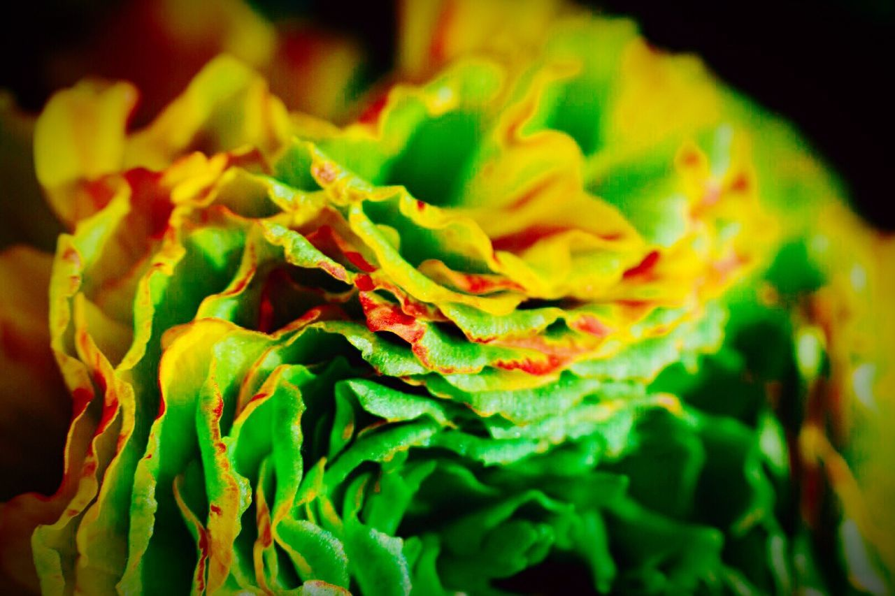 close-up, green color, freshness, selective focus, no people, full frame, beauty in nature, nature, food, outdoors, day, fragility, flower head