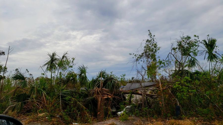Hurricane Michael 2018 Tree Sky Cloud - Sky Tropical Tree