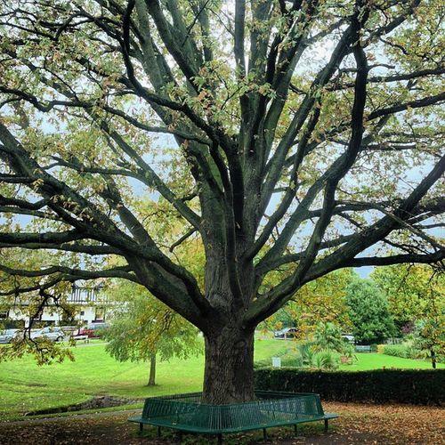 #tree #london every branch of the tree looks like a tree... Tree London