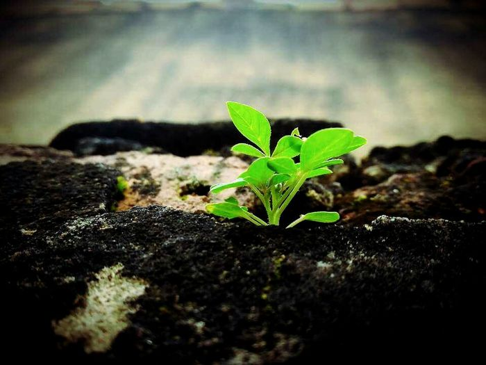 JéssicaCaroline 📷❤ Plant Nature Leaf Growth No People Lovephotos LoveNature