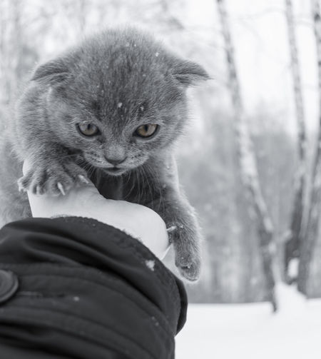 From My Point Of View Winter Winter Portrait Animal Themes Close-up Day Domestic Animals Domestic Cat Feline Holding Human Body Part Human Hand Lifestyles Mammal Monochrome Nature One Animal One Person Outdoors People Pets Real People Winter Cat