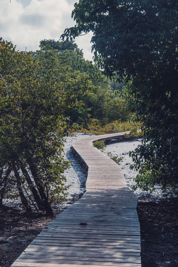 Cap Chevalier, Martinique Land Beauty In Nature Boardwalk Caribbean Day Direction Footpath Island Landscape Nature No People Outdoors Plant Scenics - Nature Sky Tranquil Scene Tranquility Tropical Tropical Climate Water Wood - Material Wood Paneling