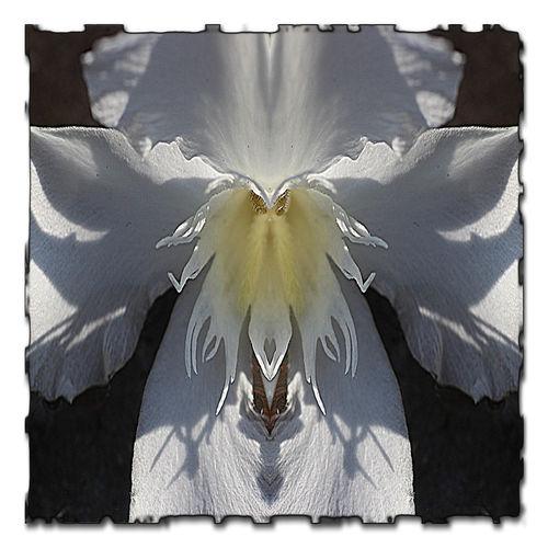 Fairy Land Fantasy Landscape Magic Magic Creatures Mirror Art Mirror Photography Mystic Creatures Photo Art Tales