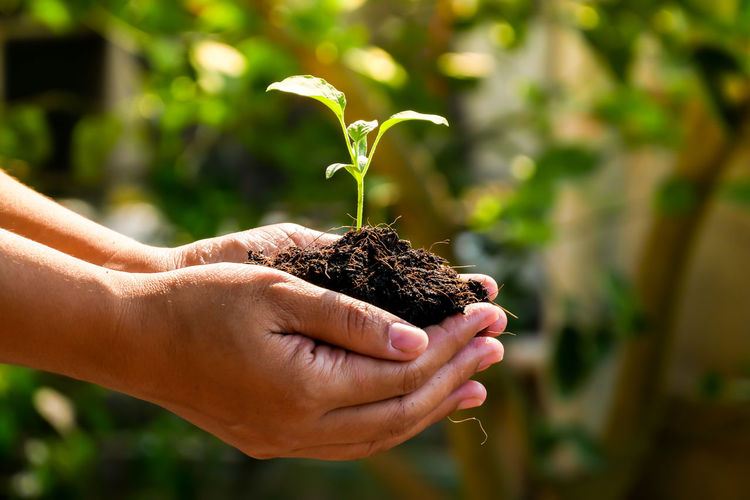 Human Hand Hand Focus On Foreground Growth Plant One Person Holding Human Body Part Nature Close-up Real People Care Beauty In Nature Botany Day Dirt Vulnerability  Plant Part Fragility Leaf Gardening Outdoors Finger Hands Cupped Human Limb