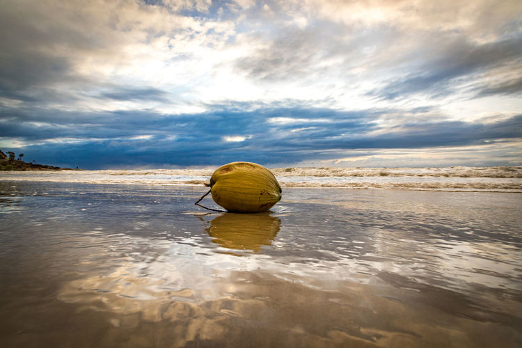 coconut on beach Australia Coconut EyeEm Best Shots Low Angle View The Great Outdoors - 2017 EyeEm Awards The Week On EyeEm Beach Beach Beauty In Nature Cloud - Sky Day Low Tide Nature Outdoors Reflection Scenics Sea Shore Sky Sunset Tranquil Scene Tranquility Water Waterfront
