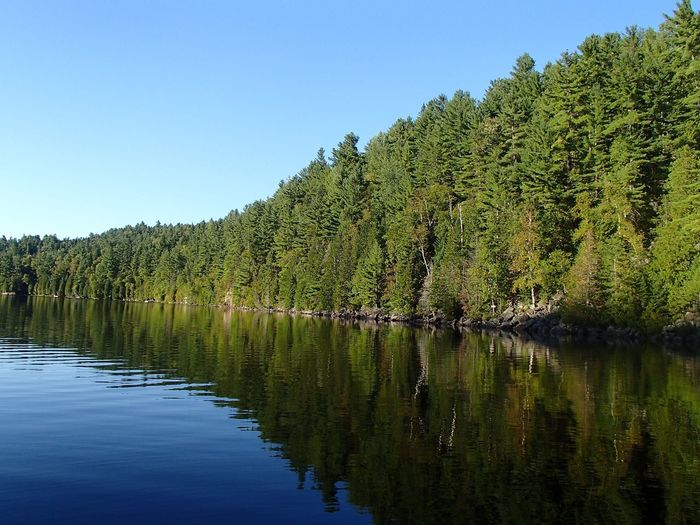 Forêt mixte laurentienne - Laurentian Mixed Forest (Lac Jackson) Plant Water Sky Tree Growth Tranquility Green Color Beauty In Nature Clear Sky Tranquil Scene Scenics - Nature Reflection Lake Outdoors