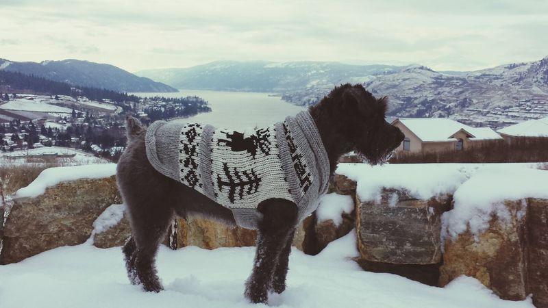 beautiful views in the Okanagan Vernon Landscape Winter White By CanvasPop #lovemydog #minischnauzer