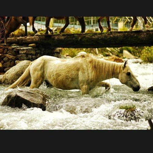 Mountains Himachal Heaven_on_earth Naturesbeauty places travel love_photography mycanon MashPics beautifulshotss