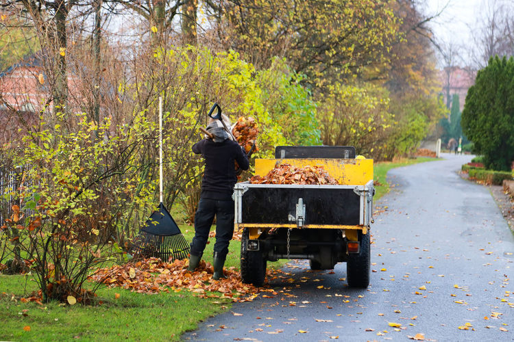 Man Collecting Leaves In Cart During Autumn