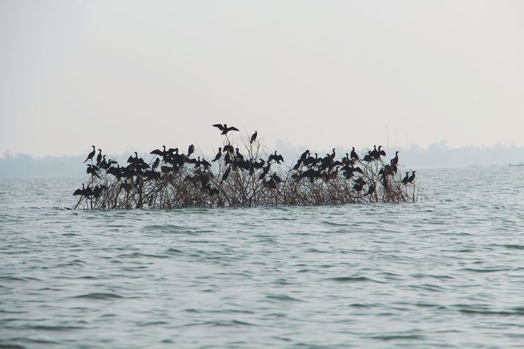 View of birds in sea against clear sky