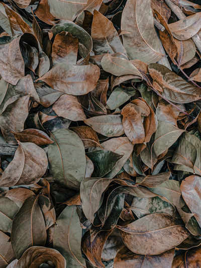 Full frame shot of dry leaves on land