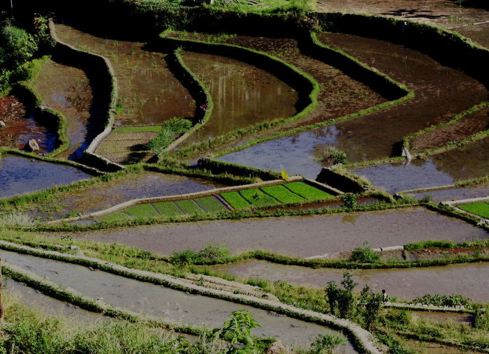 Banaue Rice Terraces Green Rice Terraces. Philippines Agriculture Beauty In Nature Curve Day Field Grass Growth High Angle View Landscape Letters In Nature Nature No People Outdoors Rice Terraces Rural Scene Scenics Shapes In Nature  Sky Tranquil Scene Tranquility Lost In The Landscape