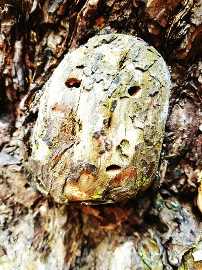 Tree Bark Face Faces In Nature Wood Tree Bark Nature Beauty In Nature Incredible