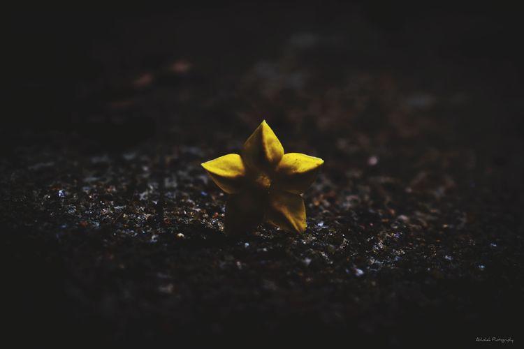 ⭐🏵️ Star