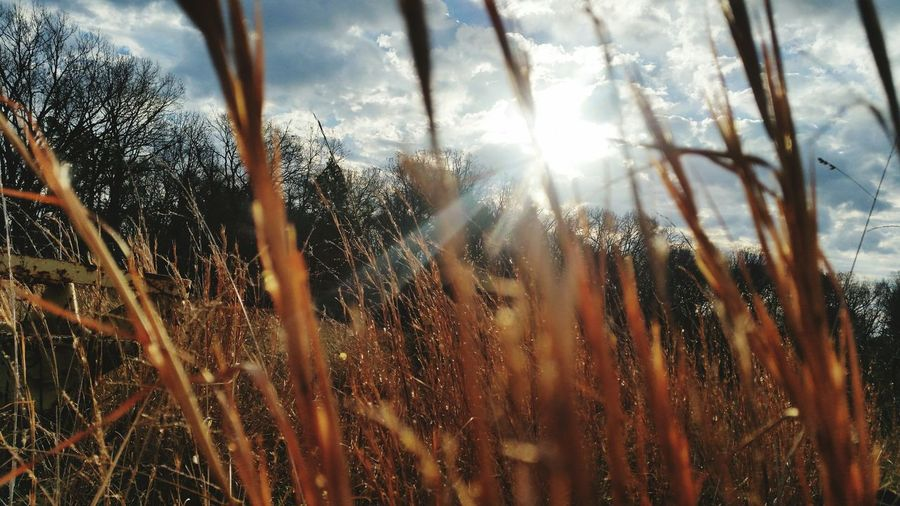 EyeEm Selects Nature No People Sunlight Backlit Grass Stalk Day Outdoors Low Angle View Close-up Beauty In Nature Sky Cloudy Morning Fall Morning Missouri Ozarks Perspectives On Nature Be. Ready. EyeEmNewHere