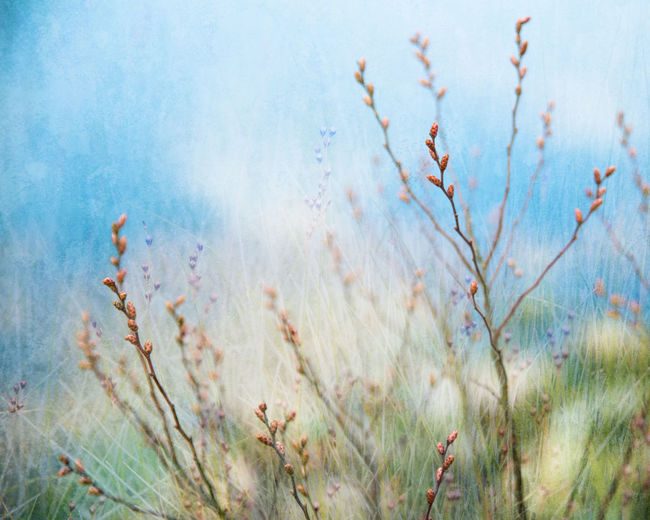 Branches and vegetation in vibrant colors Nature Plant Growth Close-up Blue Freshness Backgrounds Tranquility Fragility Beauty In Nature Spring Feelings Spring Buds On Branches Colorful Fine Art Photography Collage Creative Expression