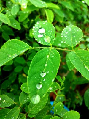 Leaves consists of real diamonds.. '' WATER'' Neha