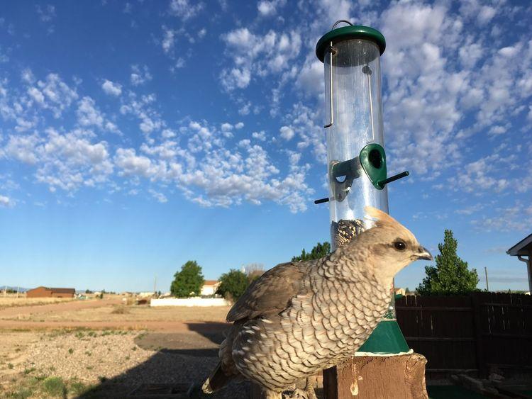 Breakfast 😁 Bird Photography Bird Feeder Bird Quail Sky Art And Craft Cloud - Sky Nature Representation Animal Representation Architecture Sunlight Day Animal Animal Themes Low Angle View Outdoors