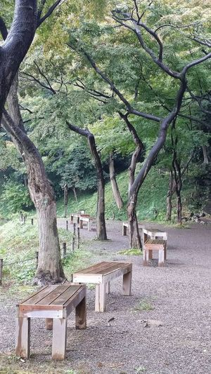 Trees Benches Koishikawa Korakuen Garden Nature Naturelover EyeEm Nature Lover Nature_collection Nature Photography Tokyo Nature Tokyo Autumn 2015 Autumn 2015 Fall Autumn Tokyo Japan Travelphotography