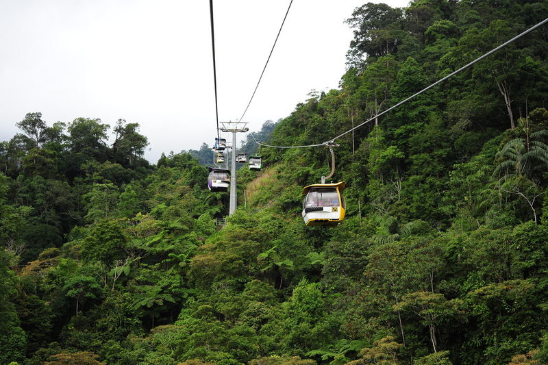 Cable Cable Car Connection Day Electricity  Foliage Forest Green Color Growth Lush Foliage Mode Of Transportation Nature No People Outdoors Overhead Cable Car Plant Sky Steel Cable Transportation Travel Tree