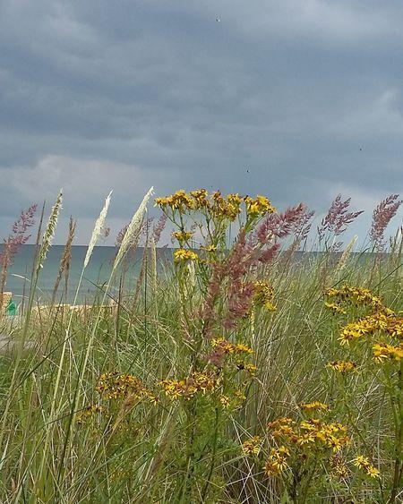 Beach Rainy Day Nature Beauty In Nature Ostsee 😎 Ostseefeeling Naturephotography Ilovethesea Scharbeutz