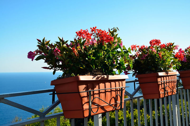 Balcony Balcony View Sea And Sky View Home Balcony Vase Vase Of Flowers Vases Flower Sea Clear Sky Water Summer Sky Plant Horizon Over Water Grass In Bloom Blossom Pollen Flower Head Blooming Plant Life Petal Botany Stamen