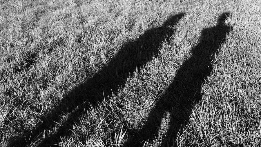 A shadow from the past Grass Shadow Nature Durbuy Full Picture Available Welcome To Black Shot with IPhone 5S
