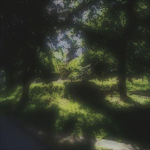 Podwórkowo... Podworko Rzeszów Podkarpacie Loves_polska instaphoto poland lubiepolske igerspoland beautiful nature słońce ciepło sunny moje miasto instagood fall_in_love_with_ happyday green