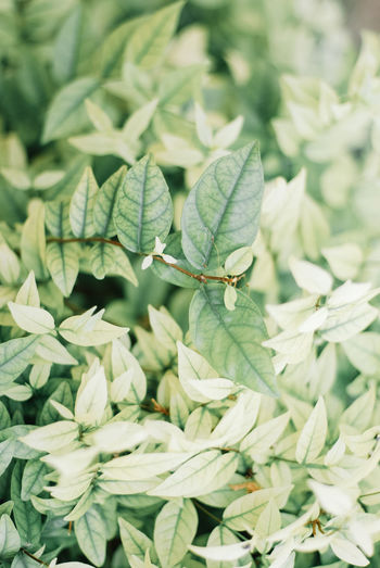 Green Color Growth Plant Leaf Plant Part Nature No People Close-up Beauty In Nature Animals In The Wild Animal Wildlife One Animal Day Animal Themes Freshness Animal Insect Invertebrate Selective Focus Focus On Foreground Outdoors Leaves