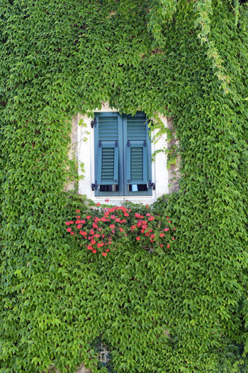 Alto Adige Architecture Beauty In Nature Building Exterior Built Structure Day Flower Freshness Green Color Growth House Italy Ivy Leaves Nature Nature No People Outdoors Plant South Tyrol Termeno - Tramin Tirol  Trentino Alto Adige Vegetation Window