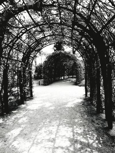arcades Natural Structures Blackandwhite Pattern Atmospheric Mood Still Life Backgrounds Pattern, Texture, Shape And Form Botanical Structures Structures In Nature Shadows & Lights EyeEm Best Shots EyeEm Nature Lover EyeEmBestPics EyeEm Best Shots - Black + White monochrome photography Arcades Potsdam Park Sanssouci Royal Garden Tree Shadow Textured